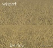 Wheat – Barley Texture for Farming Simulator 19